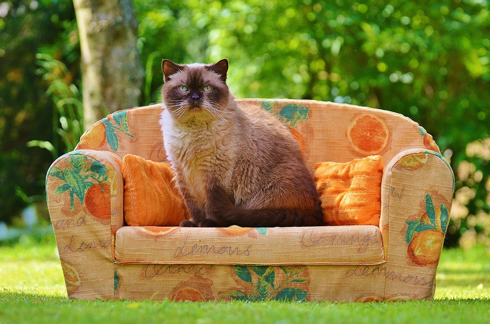 Cats and Furniture
