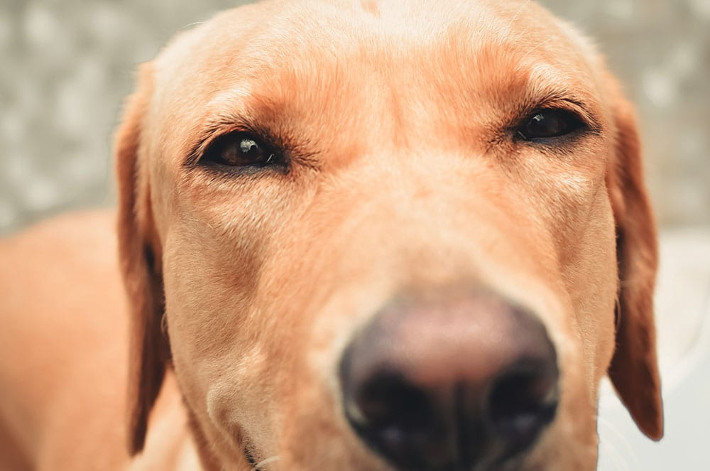 25 Fun Facts Dogs