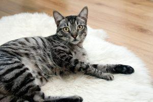 cat-468232_1920
