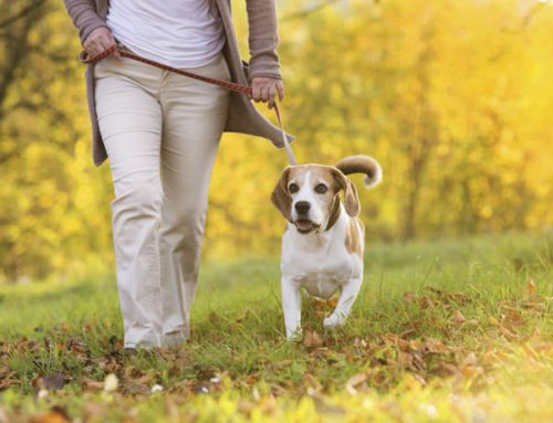 Why walking your dog is healthy for your dog and for YOU!