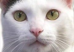 Ricky's Beautiful Eyes