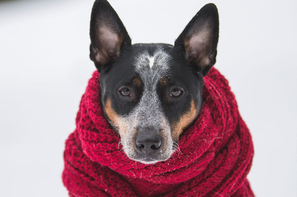 Winter Locations to Visit This Holidays with Your Pets
