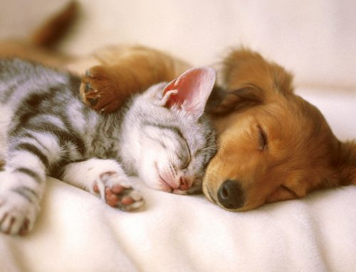A Strong & Healthy Immune System for Dogs and Cats