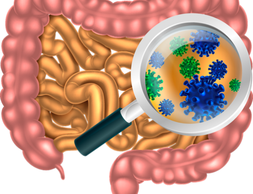 Breakthrough Nutrition for Gut Health: Prebiotics Benefit the Digestive Tract & Immune System