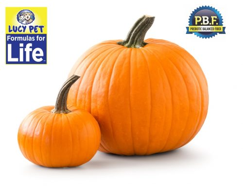 Why we use Pumpkin in our Lucy Pet Formulas for Life
