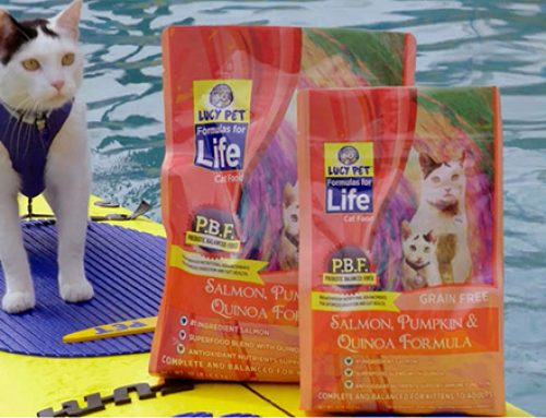 Surfing Dogs & Cats Promote new Lucy Pet Food