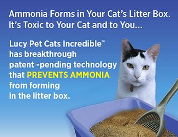 Cat litter smells like ammonia / Srt coin login member