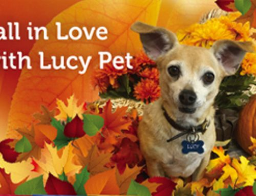 Fall in Love with Lucy Pet