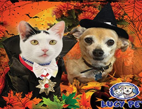 Top 10 Best Halloween Costumes EVER for your Pet