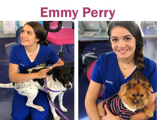 Introducing our totally awesome brand ambassador, Emmy Perry