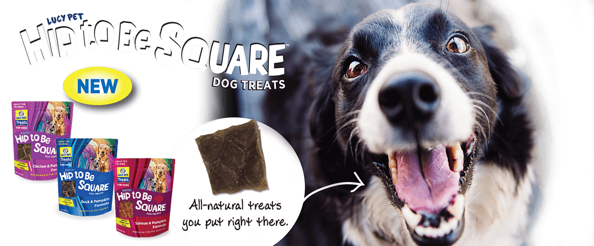 Hip To be Square treats