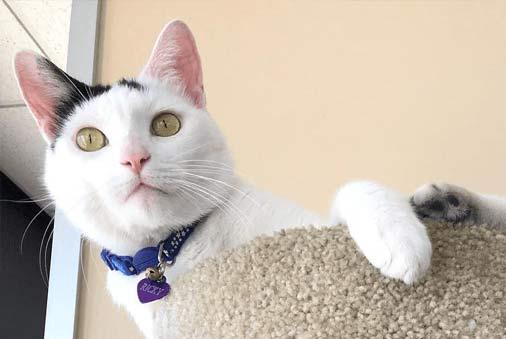 Lucy Pet Cat Litter
