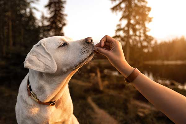 is quinoa good for dogs
