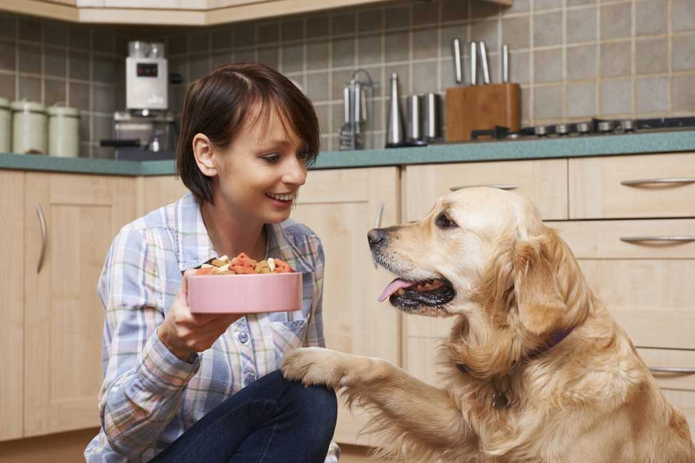A Helpful Guide Best Food for Golden Retriever Dogs