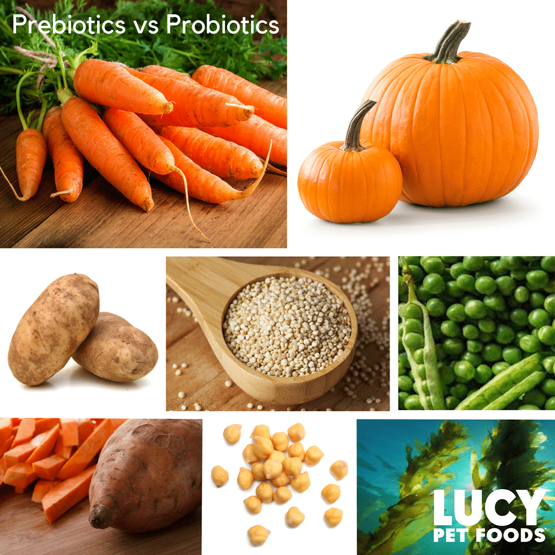 Prebiotic vs Probiotic