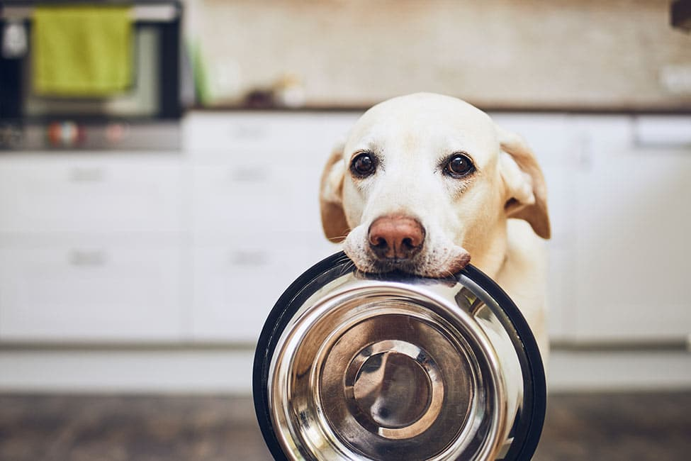 What Foods Can Dogs Not Eat